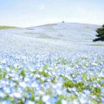 インスタ映え間違いなし!花の絶景スポット4選
