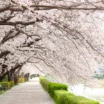 インスタ映え間違いなし!関東で人気のお花見スポット6選!